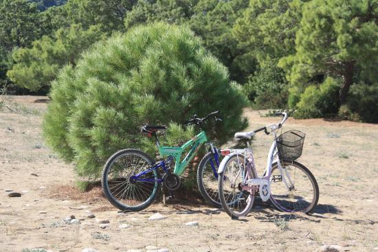 Villa Iz: оставляешь велосипеды недалеко от пляжа и идешь купаться