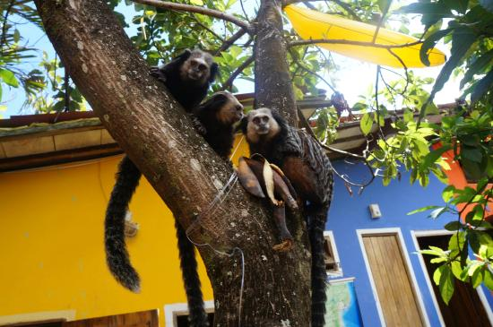 Bananas Hostel: Monkeys in the Garden