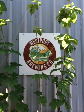 Westport Brewing Co.: Westport Brewery Hops