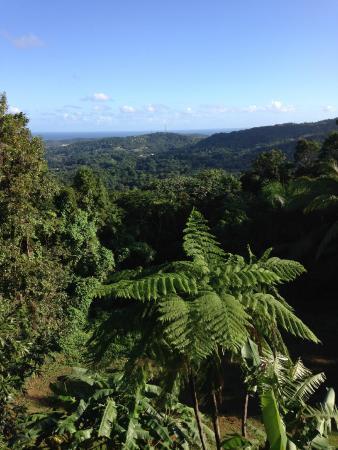 Rainforest Inn: view out to ocean