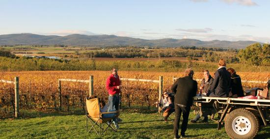 Wines for Joanie: Picnic in the Vineyard