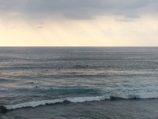 Kona Banyan Tree: Surfers...