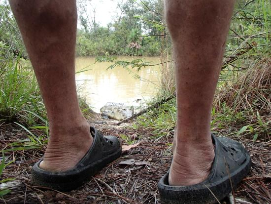 Savanna Guest House: Zoinks!!!  Nothing but air between us and the croc!