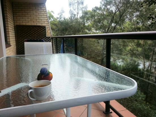 Riverview Apartments: Friendly rainbow lorikeet on our apartment's balcony checking out my coffee.