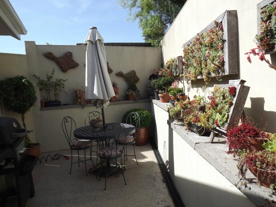 Topiary Haven: the sunny patio and Diana's fabulous container garden
