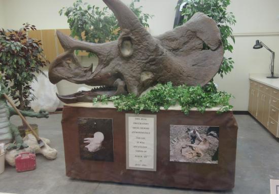 Dakota Dinosaur Museum, Dickenson, ,ND