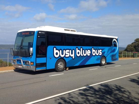 Busy Blue Bus - Day Tours