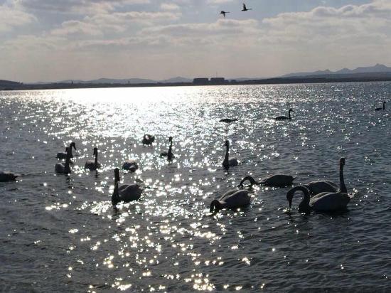 Rongcheng Tian'e Lake: 白鳥