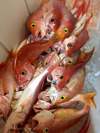 Mahi Mahi Restaurant and Bar: Fresh Red Snapper