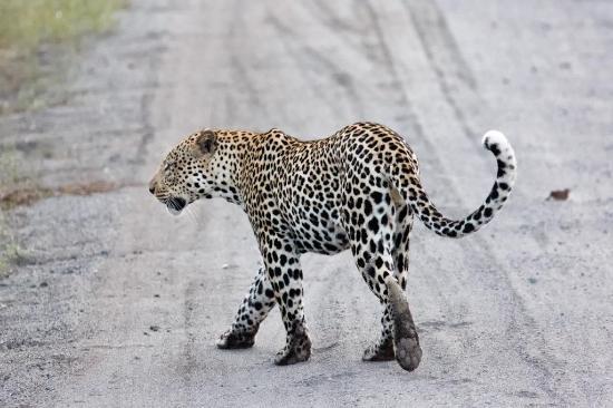 Travel Explore Africa - Day Tours : Queen Elizabeth national park