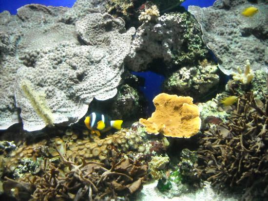Particolare acquario - Foto di Acquario Cala Gonone, Dorgali ...