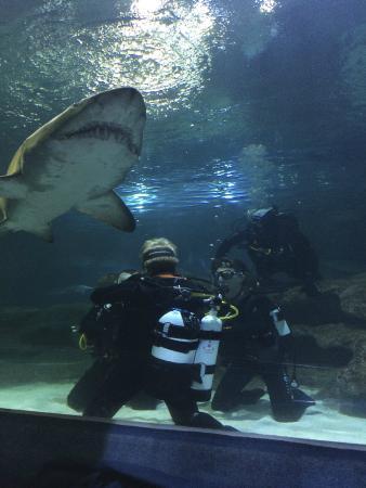Blue Planet Aquarium : Shark Dive