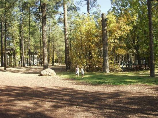 Buck Springs Resort: Our central courtyard for family BBQ's and picnics
