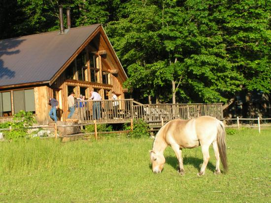 Stehekin Valley Ranch: Fjord horse in pasture in front of cookhouse