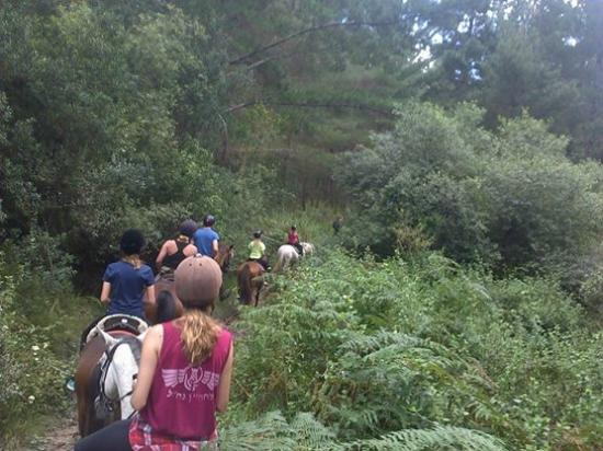 Garden Route Horse Trails: Into the indigenous forest