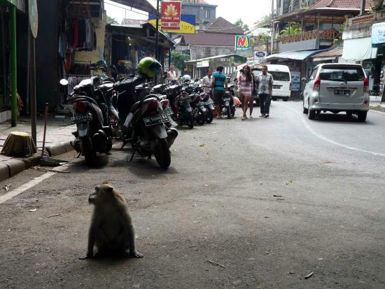 Pondok Frog Bungalow: Ubud