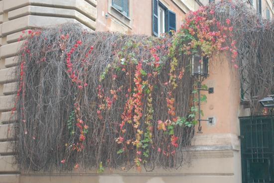 Hotel Centro Roma: vegetação em frente ao hotel