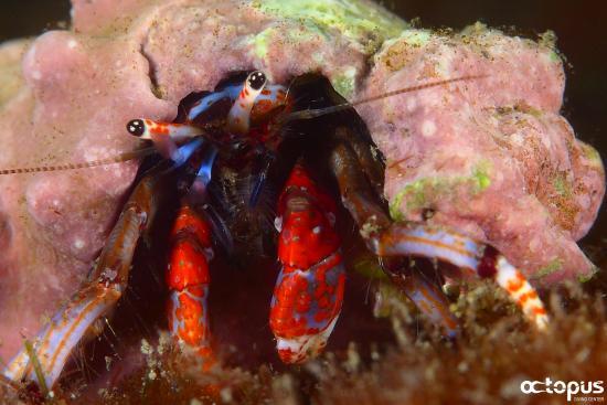 写真Octopus Diving Center枚
