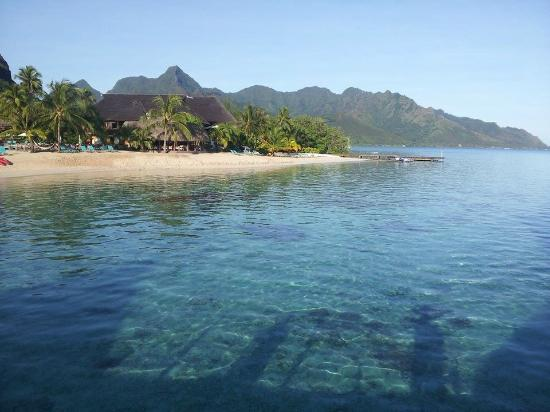 Hilton Moorea Beach And A Beach Bungalow Picture Of