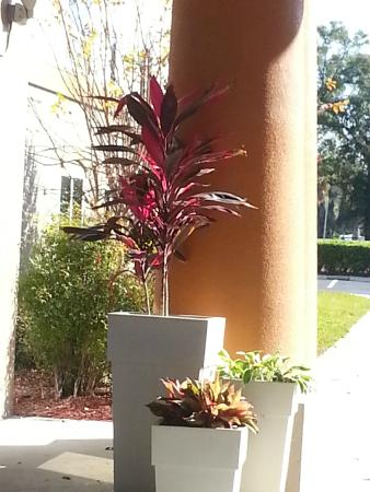Holiday Inn Express Suites Ocala - Silver Springs: Entrance - I want this plant.