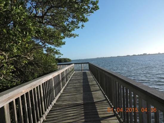 Iguana - Picture of Lemon Bay Park, Englewood - TripAdvisor