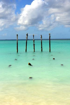 Beach at divi and tam picture of divi aruba oranjestad tripadvisor - Divi aruba all inclusive ...