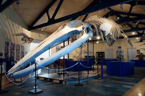 Ferrol, Spain: Esqueleto de ballena