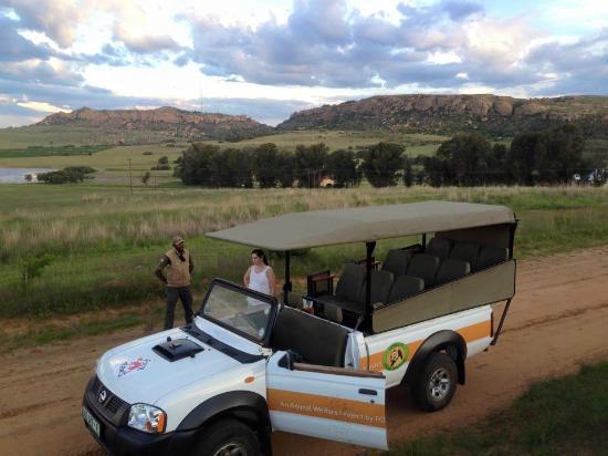 Lionsrock Lodge: Game drive vehicle