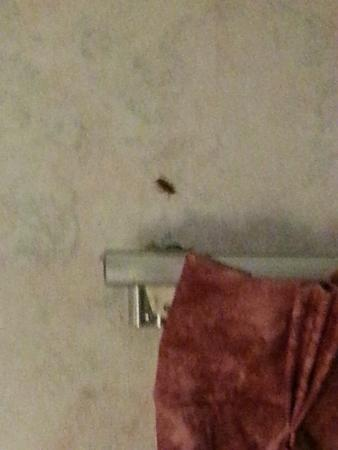 Howard Johnson Inn - Warrenton: bugs!