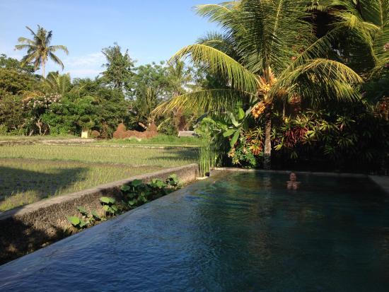 Ubud Lestari Bungalows: swimming pool