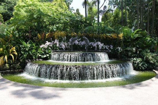 Cascade photo de jardin botanique de singapour for Jardin botanique singapour