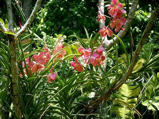Orchidées - Photo de Jardin botanique de Singapour ...