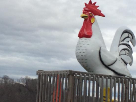 Bluff City, TN: Giant rooster at the flea market!