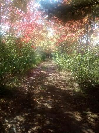 Poland Springs, ME: Walking on the nature trail in autumn