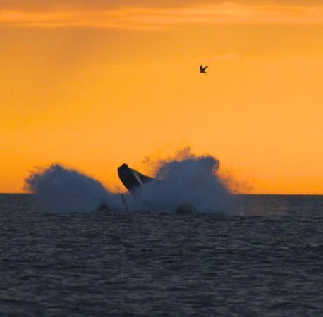 Yarmouth Port, MA: Whale show