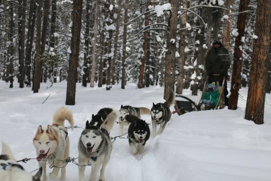 Good Times Adventures - Dog sledding adventure