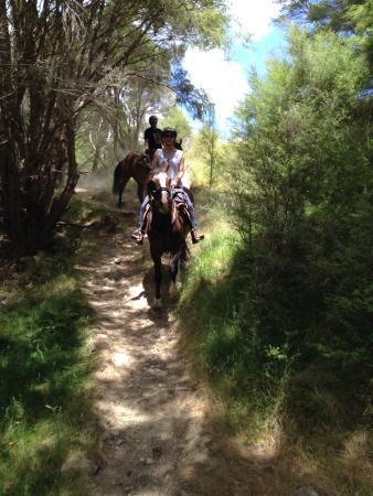 Patuna Farm Adventures: Horse photos