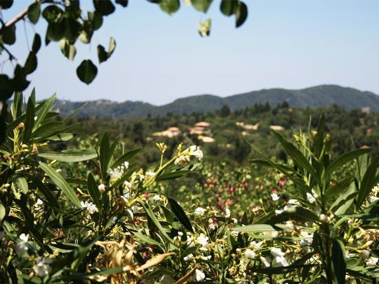 Αλέξανδρος, Ελλάδα: kolyvata