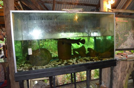 Khao Sok Tree House Resort : Garfish