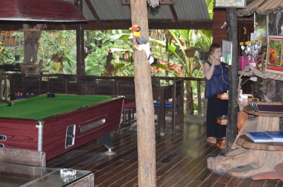 Khao Sok Tree House Resort: Pooltable