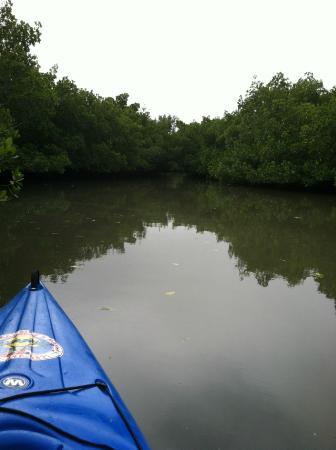 Siesta Key Bike and Kayak: Neville Wildlife Preserve