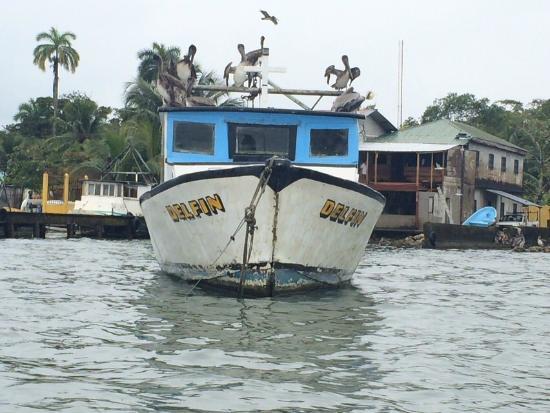 Posada El Delfin : With our own pelican flock