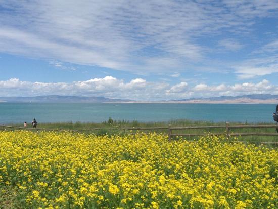 Qinghai Plateau: beautiful Qinghai Lake