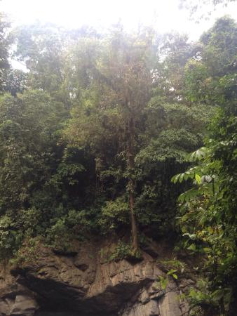 Brisas del Nara: Tree on ledge