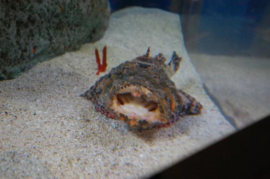 Bald eagle picture of south carolina aquarium for South carolina freshwater fish