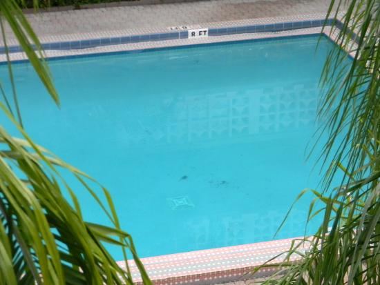 Ramada Fort Lauderdale Oakland Park: pileta sucia 2
