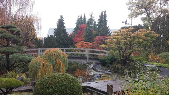 Manicured trees picture of kasugai japanese garden for Koi pond kelowna