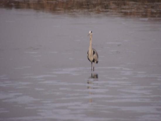 Khijadiya Bird Sanctuary : Khijadia Bird Sanctuary
