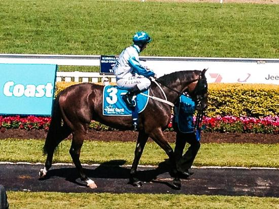 Gold Coast Turf Club: Magic millions guineas colt Testashadow