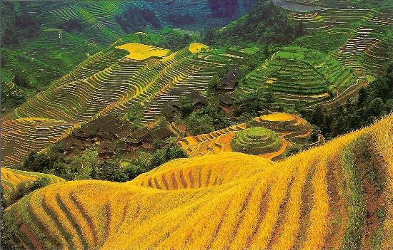 Ping'an Village: les rizières